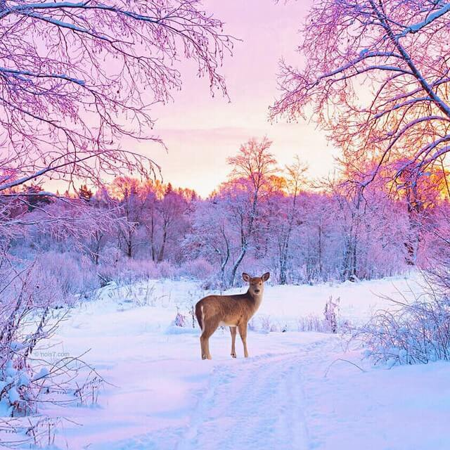 Сказочные фотографии животных, мир Роберта Янса, фото 8