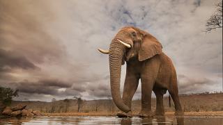 дикая природа, красивые фото животных, фото 3