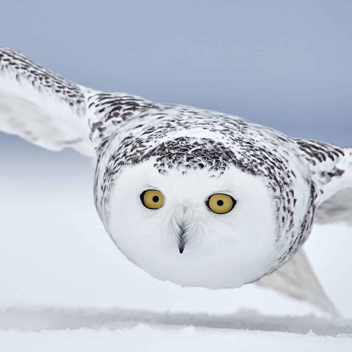 Лучшие фотографы птиц. Конкурс Bird Photographer of the Year 2018, фото 12