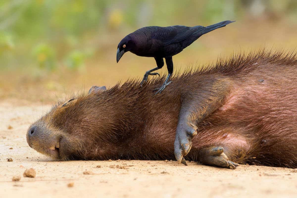 Лучшие фотографы птиц. Конкурс Bird Photographer of the Year 2018, фото 14
