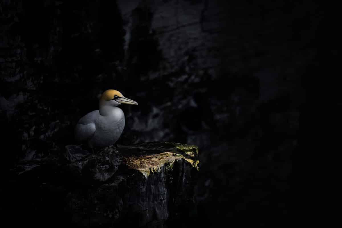 Лучшие фотографы птиц. Конкурс Bird Photographer of the Year 2018, фото 18