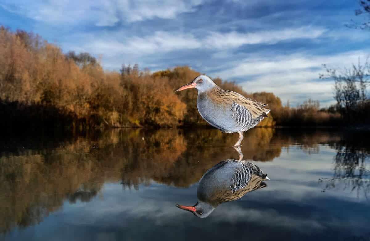 Лучшие фотографы птиц. Конкурс Bird Photographer of the Year 2018, фото 21