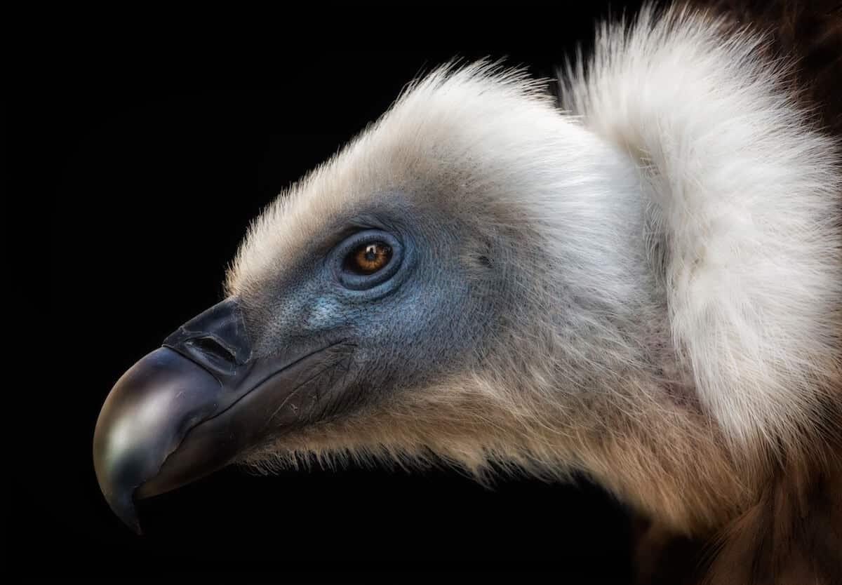 Лучшие фотографы птиц. Конкурс Bird Photographer of the Year 2018, фото 8