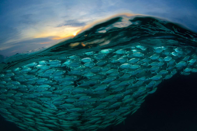 Sony World Photography Awards 2018 - Лучшие фотографии, фото 19 «Рыбная» волна